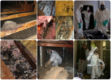 animal feces clean up nj - animal droppings removal servicing newj ersey