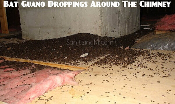 bat guano droppings cleanup service nj - found bat guano droppings in chimney NJ